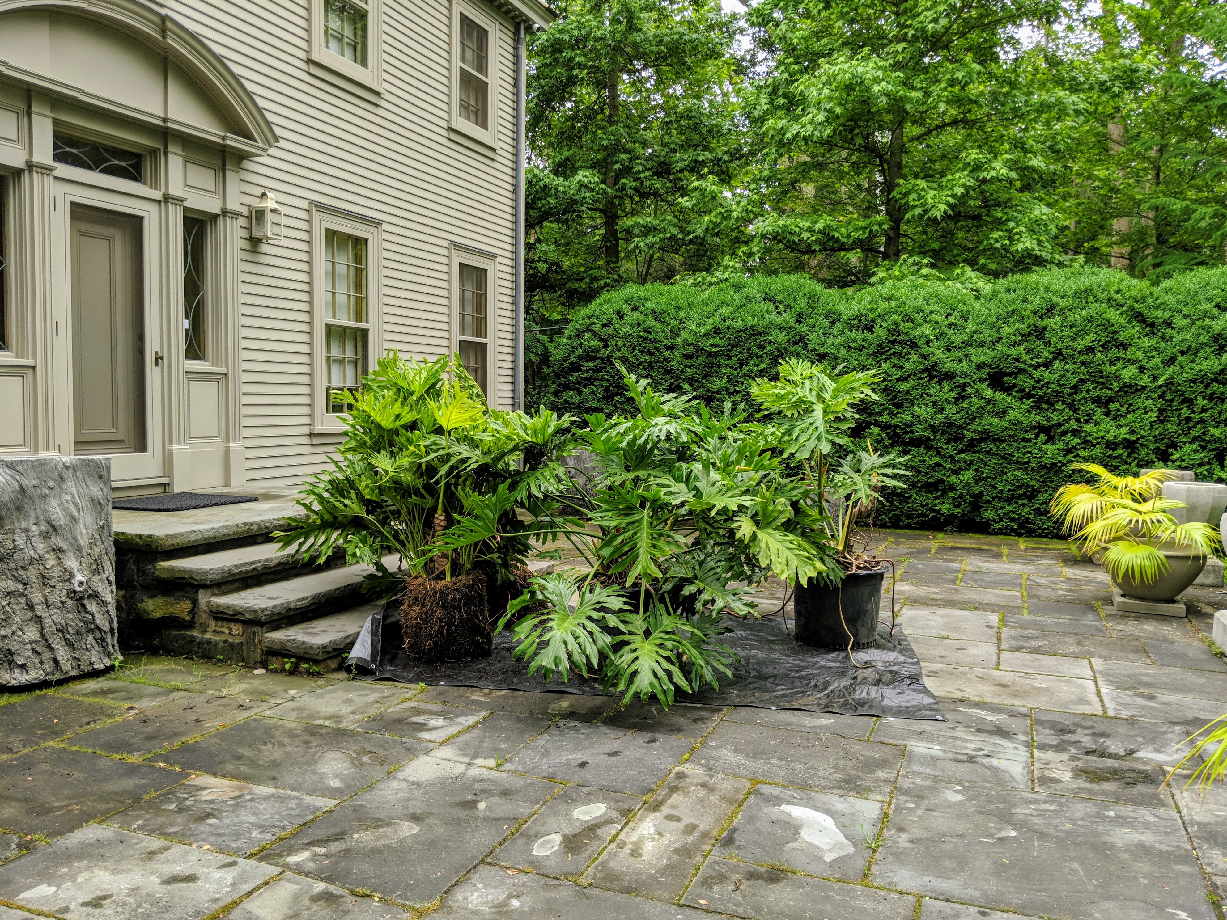 The Martha Stewart Blog Blog Archive Planting The Urns On My