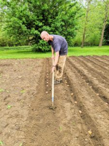 Gavin backfills all the trenches with the hoe. He also goes over the bed with a soft rake to ensure every corm is well covered and the area looks neat and tidy.