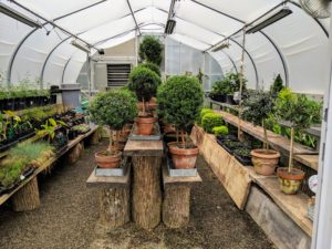 The group learned about my greenhouses. I have a total of five located in different areas of the farm. This is the smallest structure where we keep topiaries and various seedlings.