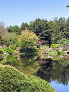 Asticou features a wonderful selection of rhododendrons and azaleas, a sand garden, and a meandering collection of fine gravel pathways.