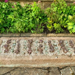 This ancient English stone trough is usually displayed on upright stone supports, but this year, I placed it on the terrace floor. It is planted with succulents and a variety of Echeveria. In less than a month, this trough will be so full of gorgeous growth.