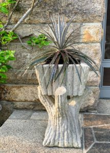 I planted another bromeliad in this beautiful faux bois planter. This planter is extremely heavy – about four to five hundred pounds.