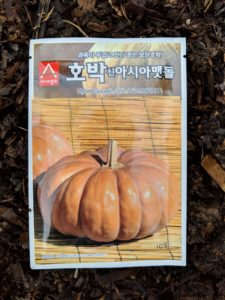 I brought these seeds back from one of my trips to Asia. I also love to use seeds I've saved from interesting or tasty pumpkins I enjoyed in past seasons.