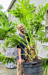 Here's Gavin carrying over another philodendron to its container.