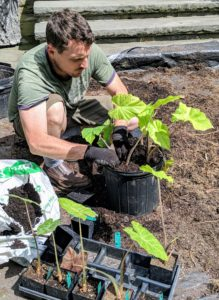 Ryan uses a professional growing mix containing Canadian sphagnum peat moss, bark, perlite, vermiculite, dolomitic limestone, and a long-lasting wetting agent.