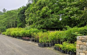 The tour passed by one area filled with potted saplings. We originally got these trees as bare-root cuttings and they've already grown quite a bit. These young trees will eventually be transplanted into the woodland or in various areas around the farm.