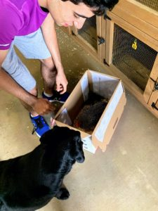 And here he is placing the birds into the box with his dog, Safari, watching attentively.