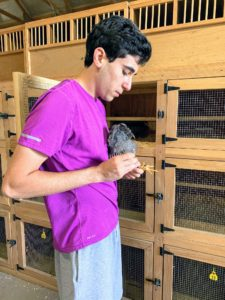 Here is Ari preparing the birds. Ari trimmed their beaks and toenails. He also wormed them and sprayed them with mite and lice medicine, which he says is a good bi-monthly practice.