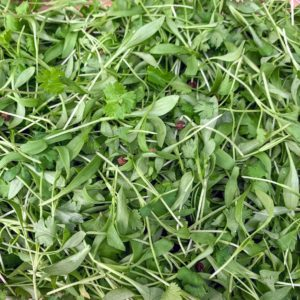 And the micro cilantro mix - picked from my gardens.