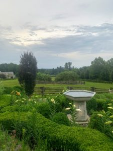 The day was warm, but thankfully the heavy rains held off until the night after our party. I took this photo from my lower terrace parterre. There are so many lilies in bloom or just about to bloom here at my farm.