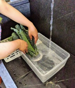 Once up in the Flower Room, Sanu starts washing and cleaning all the produce. Sanu gives the kale a quick wash, so it isn't too, too wet. Kale has purple or green leaves and can be eaten in a variety of ways.