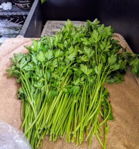 We also harvested a generous bunch of parsley. This will find its way into my morning green juice.