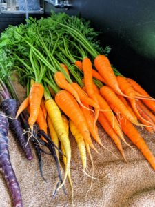 I always like to grow many varieties and colors of carrots. Most are familiar with the orange carrots, but they also come in red, yellow, white and purple.