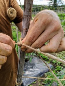 Here, Ryan ties the twine tightly around the bamboo - tight enough to hold the weight of the vines when filled with fruits.