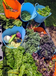Everything is loaded in trug buckets and brought up to my flower room, where they will be washed if needed, then bagged and stored in the refrigerator. I am looking forward to many meals with all this wonderful produce - the fruits of our labor. How is your garden doing this season? Share your comments below.