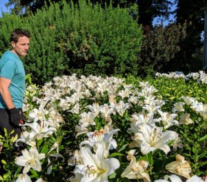 Ryan walks through the lily bed to determine which flowers should be picked considering appearance and condition, and how much longer he felt they could last - I am hosting a dinner party this weekend.