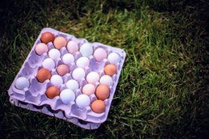 Of course, we used eggs from my prolific hens. Each person on one side of the line would get one egg. This game can be played with hard-boiled eggs, but raw eggs are more fun. The last pair to successfully toss their egg between them without dropping or breaking it wins. (Photo by Peytn Leigh)