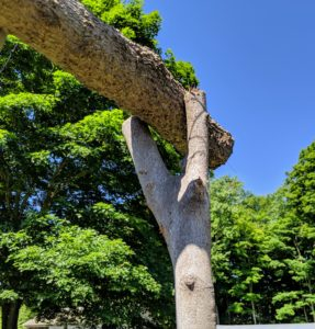 """The upright supports are made from branches with a natural """"V"""" shaped notch at one end. This is important so it could hold the heavy cross branch."""