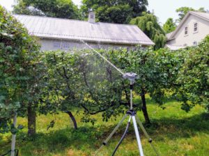 And this tripod is angled to spray just above the tallest plantings in the dwarf apple espalier behind the carport.