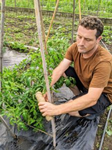Next, Ryan gently ties twine around the bamboo teepee uprights to give the plants more direction as they grow.