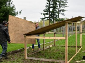 Next, the two create the roof using good quality plywood boards we already had at the farm. I always keep extra building pieces together in a safe place, so they are always available and easy to find when projects like these arise.