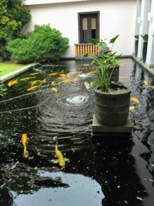 There were also lots of koi in the large in-ground pools.