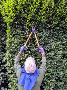 We use a traditional English style of pruning, which includes a lot of straight, clean edges. A well-manicured hedge can be stunning in any garden but left unchecked, it could look unruly.