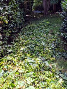 And looking down, here are all the clippings ready to be raked and taken to the compost pile.