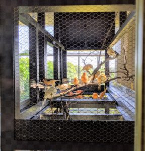My large canary cage with all my beautiful red factor canaries is one of the focal points at my Bedford, New York home. My canaries love this location – they can see so much from the big floor to ceiling windows and doors.