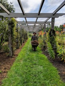 Over by the long pergola, my outdoor grounds crew keeps the gardens well mulched. Here's Dawa bringing over another load to spread over the beds. Mulch and the darker nutrient-rich compost are both made in the back fields of the farm.