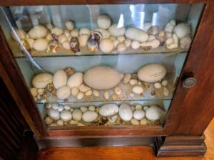 This cabinet is filled with eggs the family members collected over the years - all different types of bird and reptile eggs.