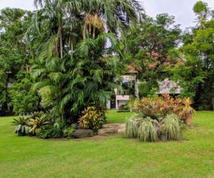 We drove to Alabang to visit a beautiful home with lots of palms and cycads - the biggest private collection in the Philippines owned by Butch and Ollie Campos. Butch is the owner of International Del Monte Pacific, Ltd., and Chairman and CEO of the NutriAsia Group.