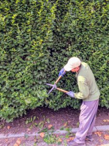 It is more time consuming this way, but it is also more exact, and that's important when sculpting formal hedges.