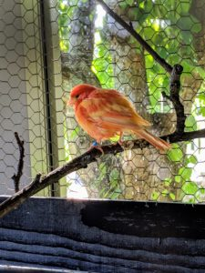Many birds fluff up their feathers when they relax for sleep - perhaps this one is ready for a mid-morning nap.