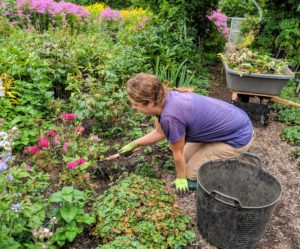 Zoe is nearby weeding the flower garden. Keeping on top of the weeds during summer is hard - weeds grow wherever they can. It's actually best to weed during and after it rains, when the roots can be removed from the soil easily.