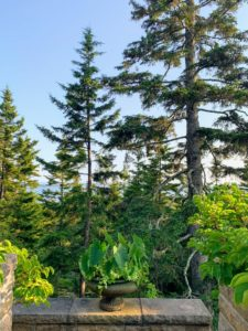Through the trees is a beautiful summer view of Seal Harbor. Maine is so magical this time of year.