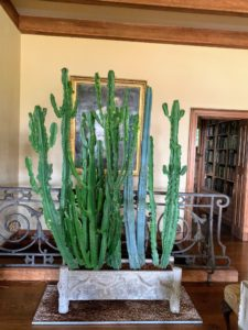 I've had this old cactus for quite some time. It lives in my living hall. Recently, I gave the tops a good pruning - it had grown so tall and unruly. I think it looks much better now.