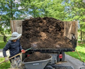 Meanwhile, Chhiring scoops mulch one load at a time into a wheelbarrow. This mulch is made right here at my farm from downed trees that have been put through the tub grinder.