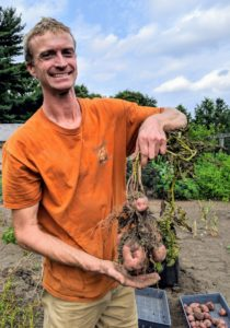 Here's Gavin with a good amount of potatoes on this plant. The tubers form around the base of each plant among the roots. Native to the Andes of South America, the potato has become the world's fourth-largest food crop, following rice, wheat, and maize.