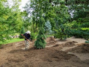 Because the pinetum covers a good portion of this area, it takes a couple of days to complete this task, but the results are so worth the effort.