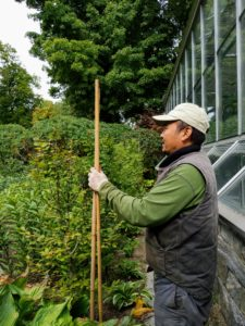 Later, Chhewang is in front of the main greenhouse setting up bamboo poles and twine to guide the pruning of the hornbeam hedges that border my lily and hosta garden.