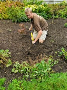 Gavin begins digging for the first plant. Lady's Mantle isn't terribly particular about soil, but it does best in a soil that is slightly acidic to neutral, with a soil pH of 5.5 to 7.5.​