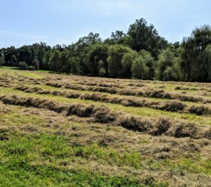 Earlier this week, I shared a blog explaining how my hay was cut and tedded. A tedder spreads and fluffs the hay in a uniform swath after the mower-conditioner has made the windrows.