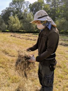 Here is Chhiring inspecting a sample of hay taken from the bottom or inside of one of the windrows. The hay should be brittle and crisp, but not too easy to shatter. Baling the hay too early can result in spoilage, mold and even spontaneous combustion in stacked bales. Hay creates a lot of dust, so everyone wears protective masks during this process.