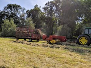 Each of these trailers can hold about 150-bales. Carlos drives up and down the windrows of both the lower hayfields.