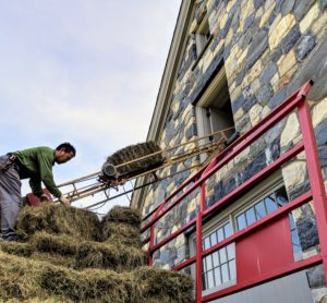 To get the bales up into the hayloft, a long motorized bale conveyor, or hay elevator, is set up. A hay elevator is an open skeletal frame, with a chain that has dull three-inch spikes every few feet to grab bales and drag them along. It works as a pulley system on a track that moves the bales up to the hayloft.