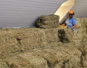 Phurba and Dawa carefully stack the bales. There is a lot of hay to stack - up to 2000 bales - everything must be stacked neatly to fit them all.