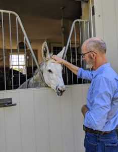 Andrew stopped to visit Clive, one of my five donkeys. Clive loves the attention, and possible treats, from visitors.