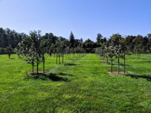 Next, we walked through the orchard - more than 200-fruit trees are planted here - apple trees, plum trees, cherry trees, peach, pear, apricot and quince trees.