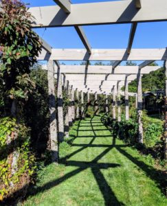 We stopped at the foot of my curvaceous clematis pergola. We talked about the many granite uprights I use around the farm - old grapevine posts. They've come in so handy over the years.
